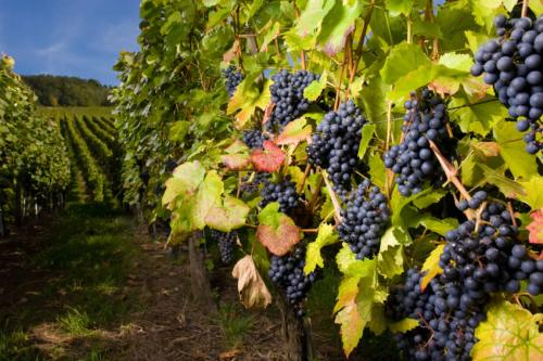 a - kelowna_winery_pics2_lrg